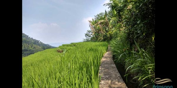 localalike-farmer-village-3